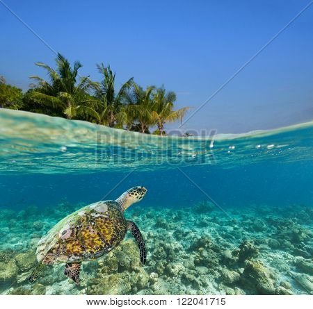 Underwater coral reef with tropical island