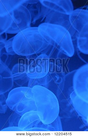 Closeup view of jelly fish in aquarium tank. Concepts: busy, competition, active