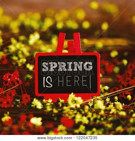a blackboard in an easel with the text spring is here written in it surrounded by many red and yellow small flowers
