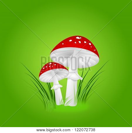 Illustration of two toadstools in grass on green background