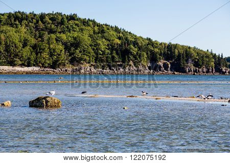 Low Tide with tidal pools near Bar Harbor Maine
