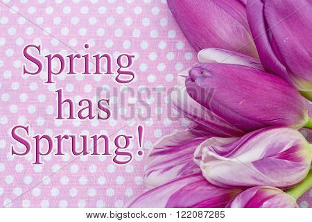 Spring has Sprung Greeting Some tulips with pink polka dots and text Spring is Here!