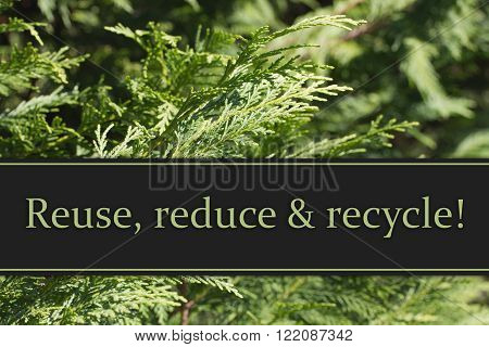 Reuse, reduce and recycle Message, Evergreen Background with text Reuse, Reduce and Recycle