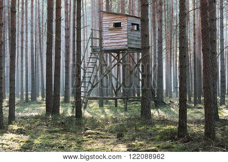 The photo shows a wooden hunting pulpit standing in the pine forest high. It is early morning. Among the trees floating fog illuminated by sunlight.