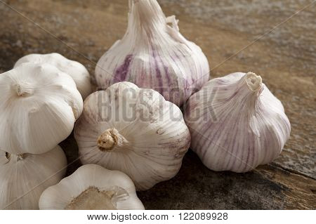 Group of fresh garlic bulbs for use as a pungent aromatic seasoning in cookery lying on a wooden table