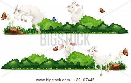 White goats in the garden illustration