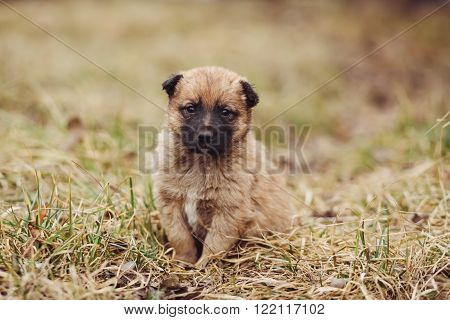 Cute sad stray puppy sitting on the tree in field