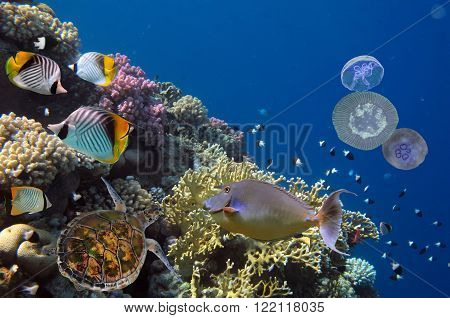 Colorful coral reef with many fishes and sea turtle. Red Sea Egypt