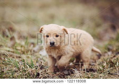 Cute beautiful stray puppy walking on the tree in field