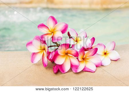 Beautiful pink flower plumeria or frangipani bunch beside the pool with relaxing mood and water backgroundcopy space