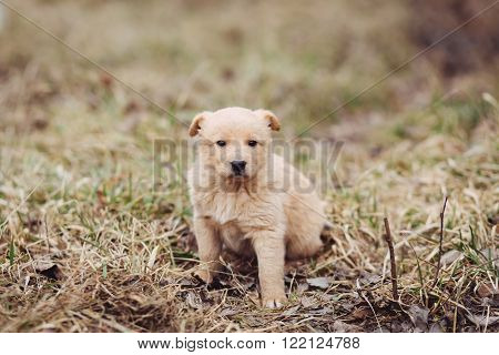Cute sad stray puppy standing on the tree in field