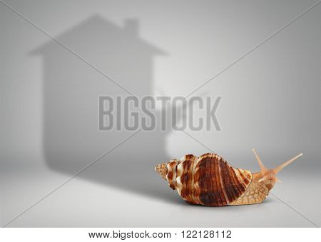Real estate concept snail with shadow house on grey