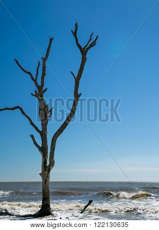 A lone driftwood tree on the beach during high tide in South Carolina.