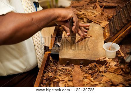 Hand Making Cigars From Tobacco Leaves, Traditional Product Of Cuba.