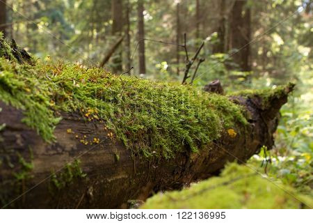the trunk of a fallen tree in the forest mossy