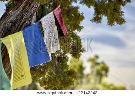 traditional buddhist prayer flags on mountain pine trees in the wind