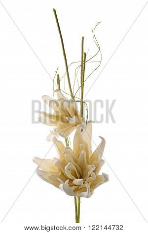 Artificial white gardenia flowers isolated on white background