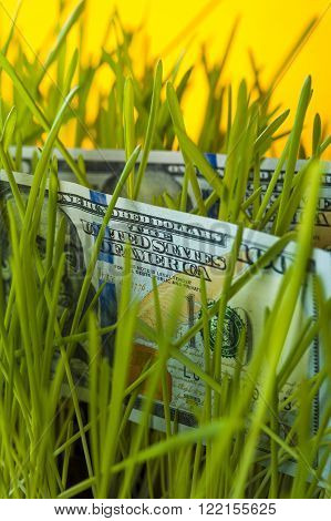 One hundred dollar bills and green grass. Investment growth. Financial concept.