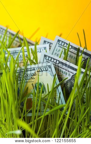 One hundred dollar bills in green lawn. Financial concept.