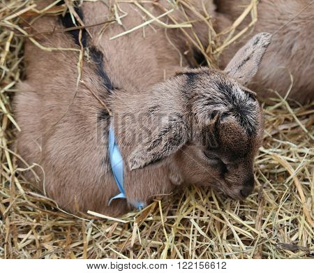 young kid sleeping in the straw of stables