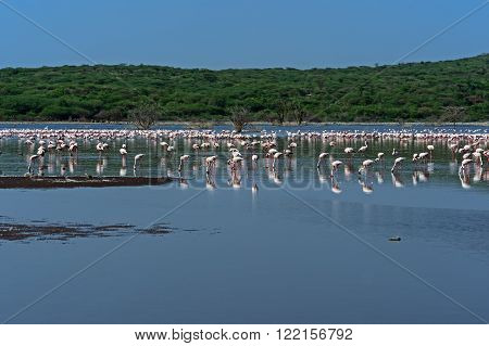 Flamingo On Lake Hock
