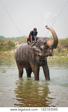 CHITWAN NEPAL - APR 2: Elephant swimming in river on Apr 2 2014 in Chitwan National park Nepal