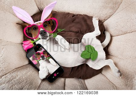 Easter Bunny Dog In Bed