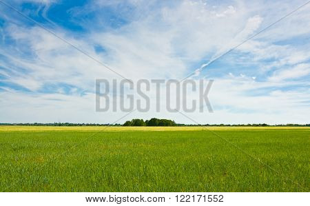 Beautiful summer landscape: green grass blue sky and white clouds