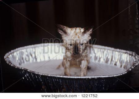 Unhappy Cat Getting Bath
