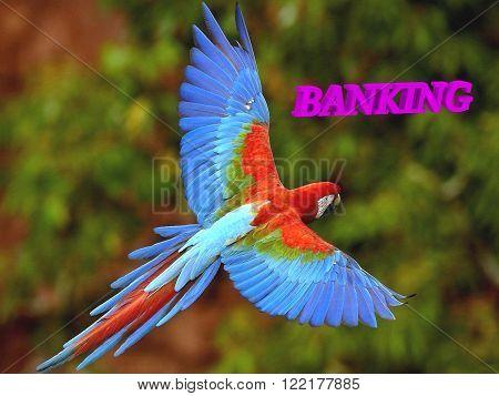 BANKING bright volume letter wild animal colour BIRD on forest background