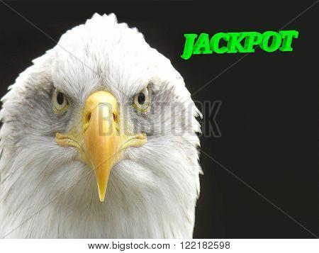 JACKPOT bright green volume letter animall white eagle on black background