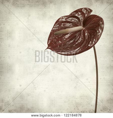 textured old paper background with dark red anthurium