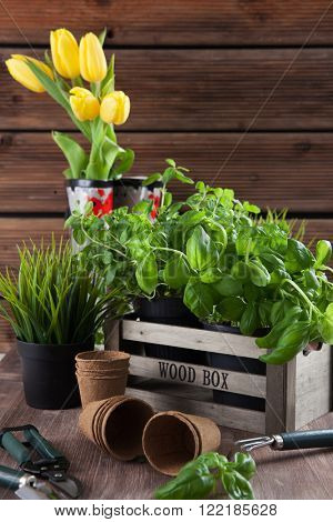 Different plants for planting with garden tools