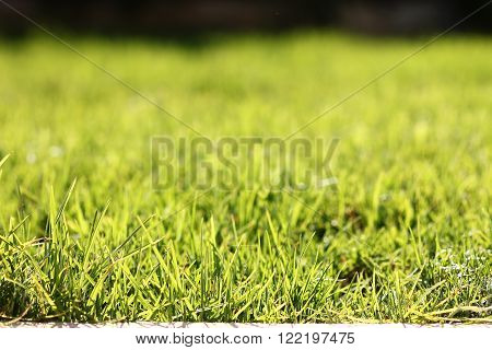 a green grass for a one  background