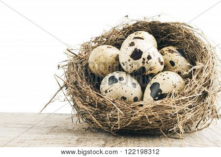 quail eggs in nest closeup on wooden background