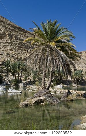 Oasis in the Desert in Sultanate Oman
