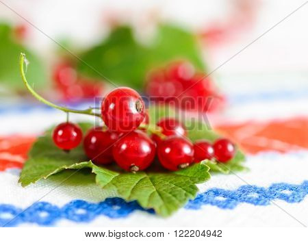 Red Currant Berries On A Leaf.