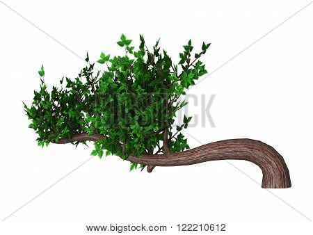 Digital render of a green bonsai tree isolated on white background, han-kengai style