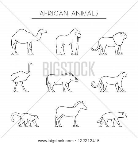 Vector line set of african animals. Outline dromedary gorilla and lion. Line icon ostrich warthog and leopard. Linear zebra lemur and hyena. Linear silhouettes african animals isolated.