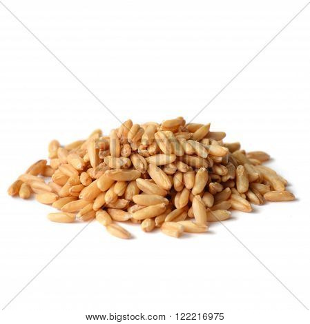Whole Oat Seeds