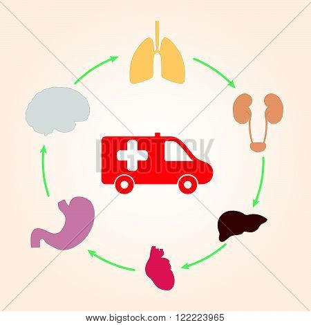 Medical scheme infographics ambulance and human organs: heart lungs liver kidneys brain.