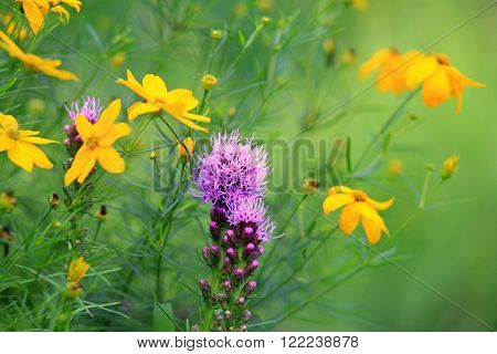Close up shot of wild flowers in spring time