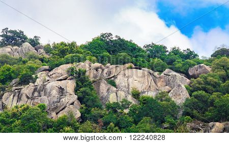 Close-up of rocks with huge boulders and thickets of green trees and thick foliage. Rocks with boulders and bushes.