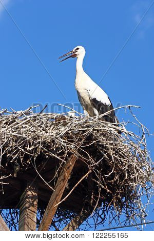 Stork in the nest on power pole
