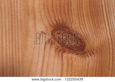 Macro Shot Of Wood Grain Usable As Texture Or Background
