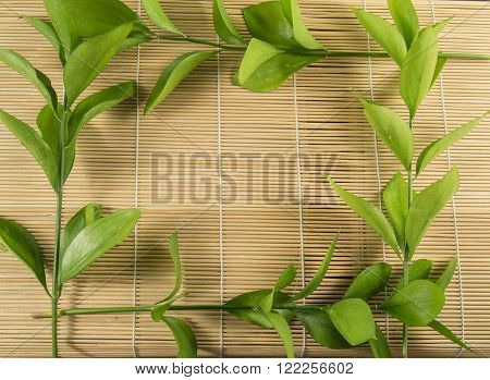 Ruscus aculeatus known as butcher's-broom frame with spase for text.