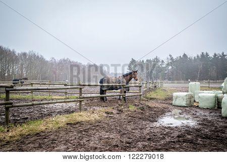 Horse Behind A Fence At A Farm