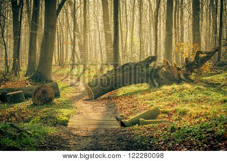 Springtime in the forest with shining sun