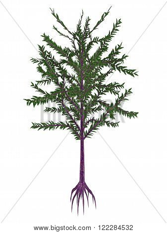 Dicroidium prehistoric seed plant isolated in white background - 3D render