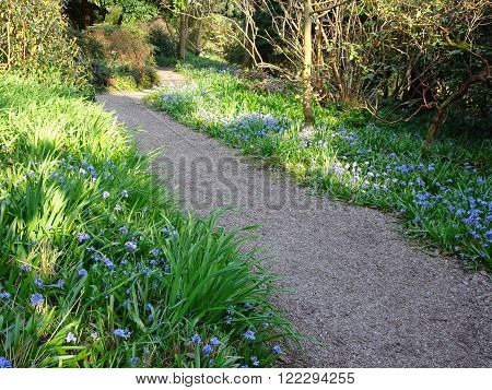 Floral pathway through rural forest photographed at Knightshayes Court in Bolham in Devon